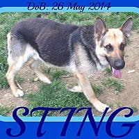 Adopt A Pet :: STING - Manchester, NH