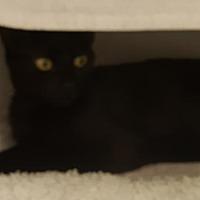Adopt A Pet :: Corinne - Battle Ground, WA