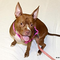 Adopt A Pet :: Sadie - Fort Wayne, IN