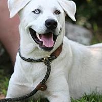 Adopt A Pet :: Butterball - York, PA