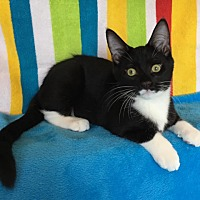 Adopt A Pet :: Fratello - Green Bay, WI