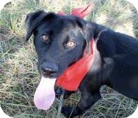 Labrador Retriever Mix Dog for adoption in Kimberton, Pennsylvania - Jagger