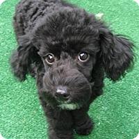 Adopt A Pet :: Pat - pending adoption - Dover, MA