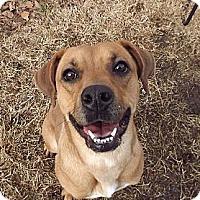 Adopt A Pet :: Ivory - Fort Riley, KS