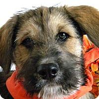 Adopt A Pet :: Keeva - Monteregie, QC