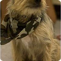 Adopt A Pet :: Sparky - Arlington, TX