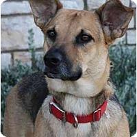 Adopt A Pet :: Audrey - Gilbert, AZ