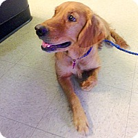 Adopt A Pet :: Fiona & Celia - New Canaan, CT
