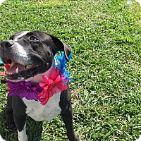 Adopt A Pet :: Marco - Lockhart, TX