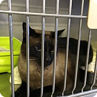 Adopt A Pet :: Louie - Byron Center, MI