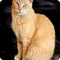 Adopt A Pet :: Chester - Dalton, GA