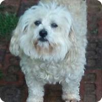 Adopt A Pet :: Rousy - Irmo, SC
