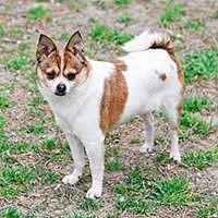 Adopt A Pet :: Nina - Virginia Beach, VA