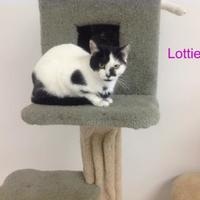 Adopt A Pet :: Lottie - Crossfield, AB