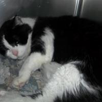 Adopt A Pet :: Manni - Antigo, WI