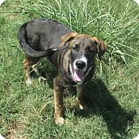 Adopt A Pet :: Kaiser - Copperas Cove, TX