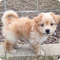 Adopt A Pet :: Ivan - Mira Loma, CA