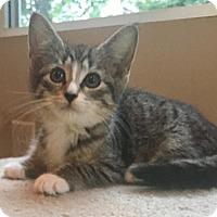Adopt A Pet :: Treble - River Edge, NJ