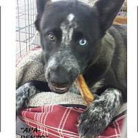 Adopt A Pet :: Apa Renzo - El Cajon, CA
