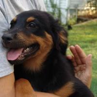 Adopt A Pet :: roo - benton, TN