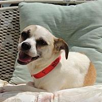 Adopt A Pet :: DAPHNE - Sussex, NJ