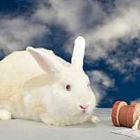 Adopt A Pet :: Naya - Marietta, GA