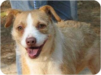 Fox Terrier (Wirehaired)/Terrier (Unknown Type, Medium) Mix Dog for adoption in Wilmington, Delaware - Laney    cs