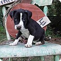 Adopt A Pet :: Linus - Roaring Spring, PA
