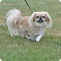 Adopt A Pet :: Peppy - Tumwater, WA