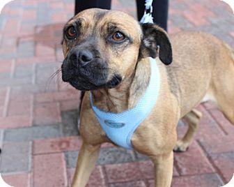 Terrier (Unknown Type, Medium)/Shepherd (Unknown Type) Mix Dog for adoption in Las Vegas, Nevada - TILLY