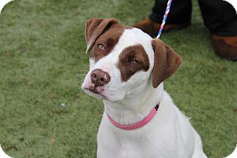 Retriever (Unknown Type) Mix Dog for adoption in Greensboro, North Carolina - Brie
