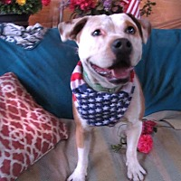 Adopt A Pet :: Sasha - Toluca Lake, CA