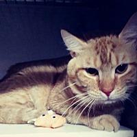 Adopt A Pet :: Rusty - Trevose, PA