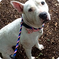 Adopt A Pet :: Souiee in CT - East Hartford, CT