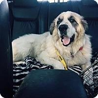 Adopt A Pet :: Shaggy - Del Rio, TX
