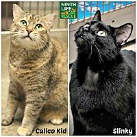 Adopt A Pet :: Calico Kid & Slinky - Oakville, ON