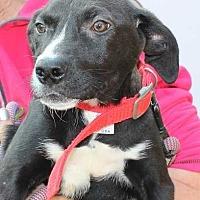 Adopt A Pet :: Cher - Clear Lake, IA