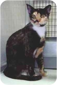 Calico Cat for adoption in Port Lavaca, Texas - Cammi