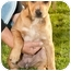 Photo 2 - Labrador Retriever/Beagle Mix Puppy for adoption in Marina del Rey, California - Luka