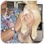Photo 3 - Labrador Retriever/Australian Shepherd Mix Puppy for adoption in Seattle c/o Kingston 98346/ Washington State, Washington - Davis