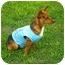 Photo 3 - Chihuahua Mix Dog for adoption in Corpus Christi, Texas - C.B.