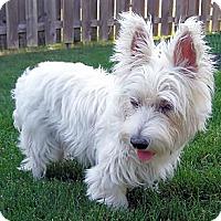 Adopt A Pet :: SNOWY - GARRETT, IN
