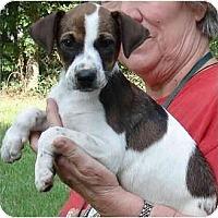 Adopt A Pet :: Sarah - Kingwood, TX