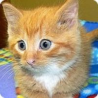 Adopt A Pet :: Benson - Green Bay, WI