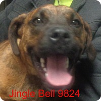 Adopt A Pet :: Jingle Bell - Greencastle, NC