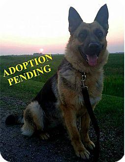 German Shepherd Dog Mix Dog for adoption in Winnipeg, Manitoba - KARMA