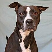 Pit Bull Terrier Dog for adoption in Hankamer, Texas - Blackie- Watch my Video