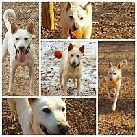 Adopt A Pet :: marley - Gainesville, GA