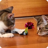 Adopt A Pet :: Seymour and Helen - Germantown, MD