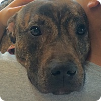 Adopt A Pet :: Nellie-URGENT - Oak Ridge, NJ